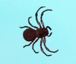 Jackson Leong - Spider