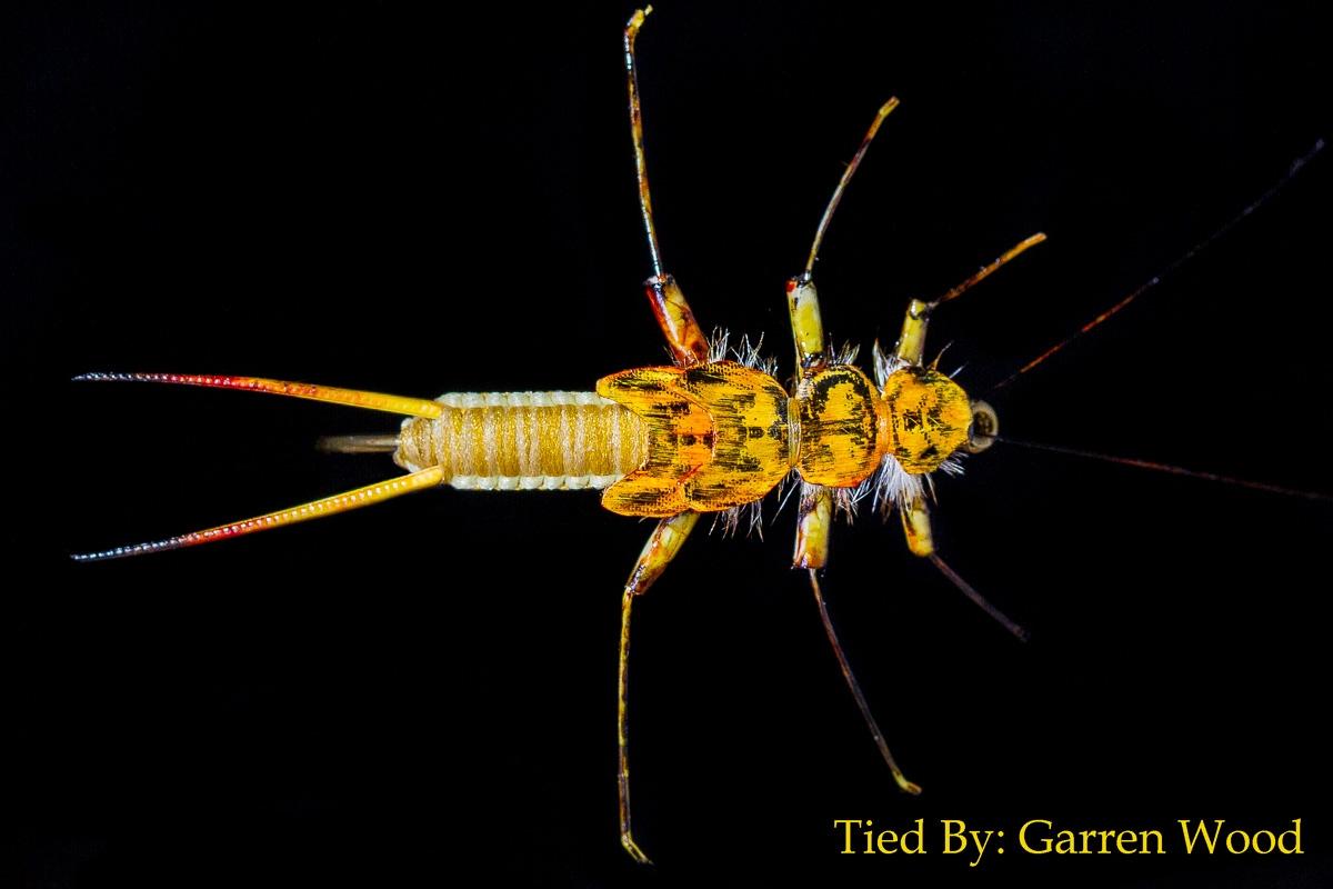 Woven Golden Stonefly