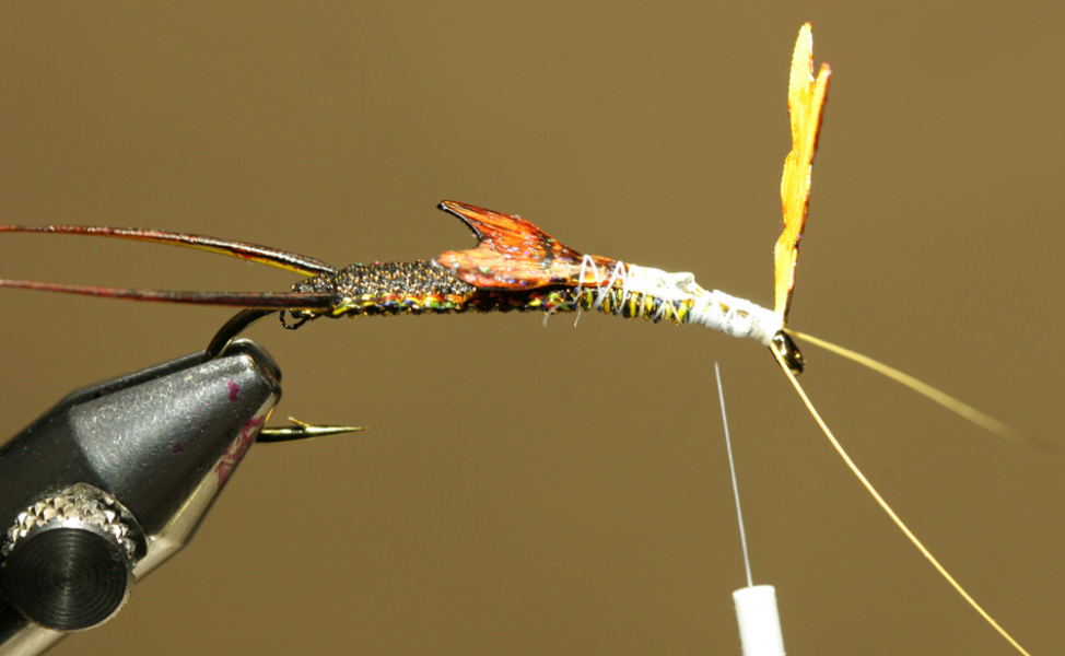 Woven Stonefly - Step 11a